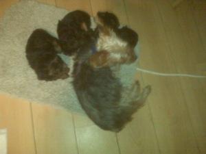 sleepy pups 12-5-10